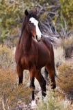 ряд лошади открытый одичалый Стоковая Фотография RF