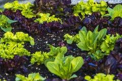 Ряд смешивания сада Veggie овощей Стоковое Изображение RF