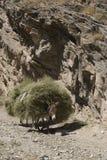 ряд uzbekistan nuratau Стоковая Фотография RF