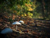 Перспектива гриба Стоковые Изображения