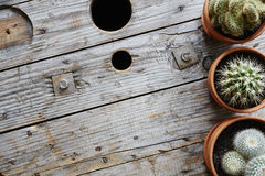 Ряд кактусов в глиняных горшках на промышленном деревянном тросовом ролике Стоковое Изображение