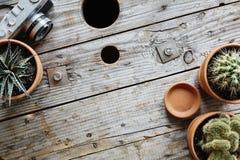 Ряд кактусов и украшения камеры на деревянном тросовом ролике Стоковые Изображения RF