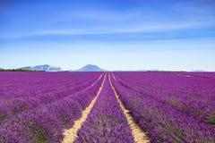 Рядки полей цветка лаванды зацветая бесконечные Valensole Провансаль стоковая фотография