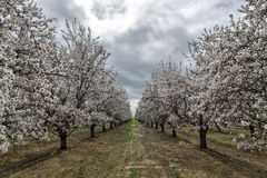 Весна вперед. стоковая фотография
