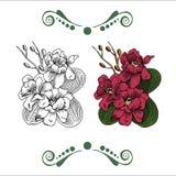 Ряд цветов и расцветки Стоковая Фотография