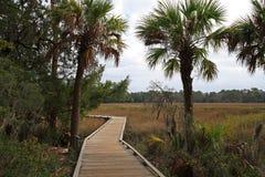 саванна болотоа Georgia Стоковые Изображения RF