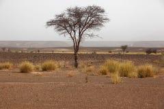 Саванна в Марокко Стоковые Изображения RF