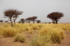 Саванна в Марокко Стоковое Изображение RF