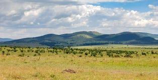 Саванна в национальном заповеднике Mara Masai, Кении стоковое изображение rf