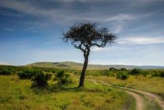 Саванна в национальном заповеднике Mara Masai, Кении стоковая фотография