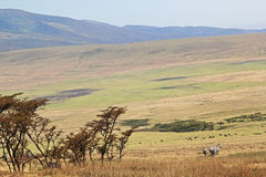 Саванна около кратера Ngorongoro, Танзания Стоковое Изображение RF