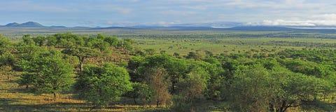саванна панорамы Стоковые Изображения RF
