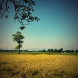Саванна с деревом и Гималаи выстраивают в ряд на horizont Стоковое фото RF