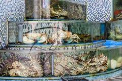 Садки для рыбы рынка морепродуктов в Sai Kung, Гонконге Стоковые Изображения