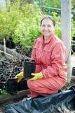 Садовник выбирает ростки bush стоковая фотография