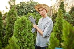 Садовник Гай в соломенной шляпе кладет перчатки сада на его руки в питомник-сад с много thujas на теплое солнечном стоковые фото