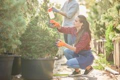 Садовник девушки одетый в рисберме подрезает заводы в красивом питомник-саде на солнечный день стоковая фотография