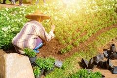 Садовник женщины засаживая цветок Стоковые Изображения RF