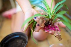 Садовник маленькой девочки Стоковые Изображения