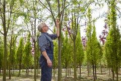 Садовник наблюдает бирку на дереве в магазине сада стоковое изображение rf