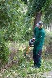 Садовник подрезая кусты с резцом щетки Стоковые Изображения