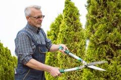Садовник режет ножницы деревьев стоковая фотография
