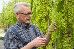Садовник режет ножницы кустов стоковое фото