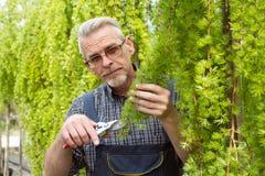 Садовник режет ножницы кустов стоковые изображения rf
