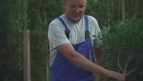 Садовник управляет деревом на вагонетке акции видеоматериалы