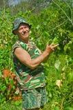 садовник 3 огурцов Стоковое Изображение RF