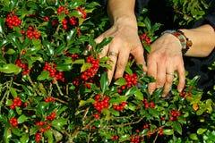 садовник Стоковое Фото