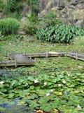 садовничает вода monet s лилии Стоковая Фотография