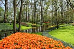 садовничает keukenhof Фото макроса тюльпанов стоковое изображение