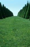 садовничает versailles Стоковая Фотография