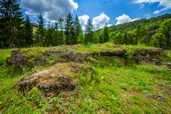 Садовничайте с камнями, зеленой травой, кустами и деревьями Стоковые Фото