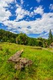 Садовничайте с камнями, зеленой травой, кустами и деревьями Стоковое фото RF