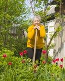 Садовничать пожилой женщины Стоковое фото RF