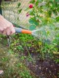 Садовничать - полив цветков Стоковое Изображение RF