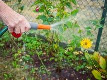 Садовничать - полив цветков Стоковое Изображение