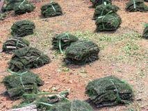 Садовничать пука новой травы установленного стоковые изображения