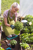 садовничать Стоковое Фото