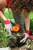 садовничать Стоковые Изображения RF