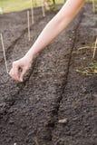 садовничать 47 задворок Стоковая Фотография RF