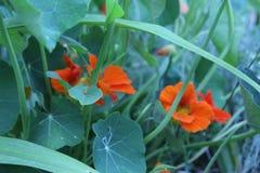 Садовничающ используя принципы permaculture, синергия между заводами Мой органический сад стоковое изображение