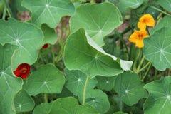 Садовничающ используя принципы permaculture, синергия между заводами Мой органический сад стоковая фотография rf
