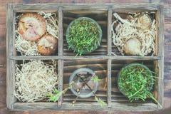 Садовничающ и засаживающ концепцию Саженцы, садовые инструменты, клубни стоковое фото