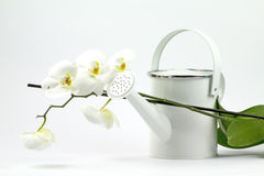 садовничая белизна Стоковая Фотография