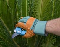 садовничая вал ладони руки глобуса подрежа Стоковая Фотография RF