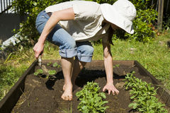 садовничая детеныши женщины стоковое фото rf