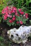 садовничая дом Стоковая Фотография